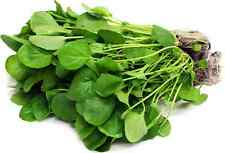 Upland Cress 2000 seeds Barbarea verna * Vegetable * Salad CombSH  D53