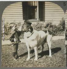 Cute Little Boy W/ Large Dog St Bernard? Outdoor Stereoview