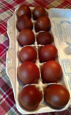 10 ++ Black Copper Maran Fertile Hatching Eggs