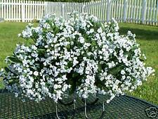 Doublewide length White Babys Breath Tombstone Saddle Arrangement 2 urn Flowers