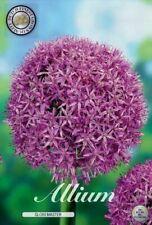 Garten-Sämereien & -Zwiebeln Allium