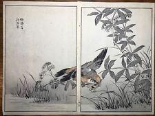Japanese Woodblock Print Maekawa Bunrei Birds of Japan Bird Catching Frog #23