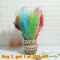 Photo Props Real Flower Natural Dried Bouquets Plant Stems Valentine's Grass