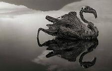 Framed Print - Skeleton Swan at Stone Lake, Tanzania (Picture Poster Animal Art)