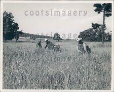 Farmers Pluck Heads Off Johnson Grass in Field Kentucky Press Photo