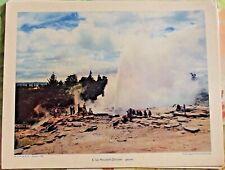 1956 Nouvelle-Zélande : Geyser Document pédagogique art print volcan eau chaude