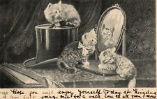Three Cute Kittens, Mirror, Top Hat - Original 1905 Greetings Postcard (LA)