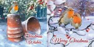 12 Pack Robin Christmas Cards Snow Scene Luxury Traditional cards 2 Design