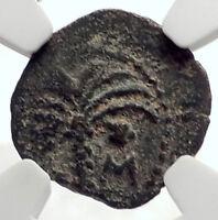 MARCUS AMBIBULUS Augustus Jerusalem Ancient 9AD BIBLICAL Roman Coin NGC i70951