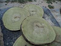 Baumscheibe, Holzscheibe, 35 x 3 cm,Akazie, Robinie