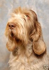 Italian Spinone A6 Blank Card No 5 By Starprint