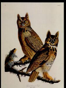 Audubon's > Horned Owl <   Print Large 16x12  genuine !