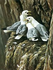 Robert Bateman KITTIWAKES GREETING #950/950