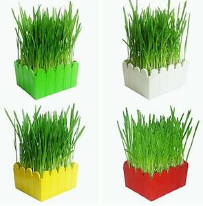 Organic Cat Snack Cat Grass Planting Suit Grow Wheat Grass For Pet Cat