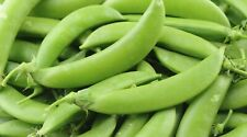 50 SUGAR SNAP PEA SEEDS 2020 (all non-gmo heirloom vegetable seeds!)
