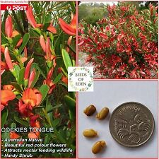 10+ COCKIES TONGUE SEEDS(Templetonia retusa); Australian Native
