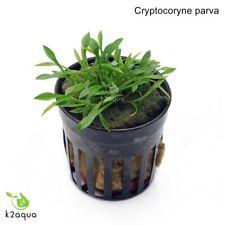 Cryptocoryne parva Live Aquarium Plants Tropical Aquascaping Tank Co2 nano EU