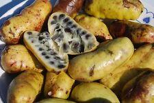 RARE 2 graines d' AQUIBOQUIL (Lardizabala Biternata) G601 ZABALA FRUIT SEEDS