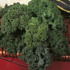 Vegetable - Borecole / Kale - Dwarf Green Curled - 2000  Seeds