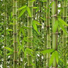 Muriva Rainforest Wallpaper