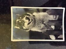 a2m oostcard old undated rp dog at gate