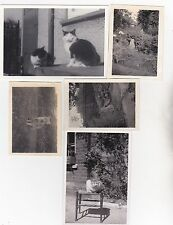 LOT 5 OLD PHOTO CATS PET ANIMALS