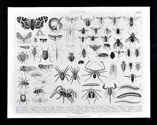 1874 Bilder Zoology Print - Insects Spiders Scorpions Centipedes Cicada Fly Moth