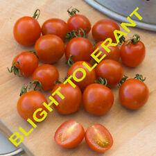 Suffolk Herbs - Organic Tomato Koralik - 15 Seeds