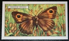 Meadow Brown   Butterfly   Original  Vintage Colour Card  VGC