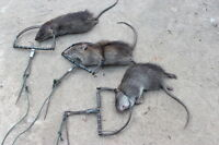 4 x Traps Mouse Rat Hunting STRONG Snap Catch Pest Trapping Iron Survival Camp