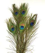 Decorative peacock feathers for sale (10 pieces)-  pauwen veren per 10!