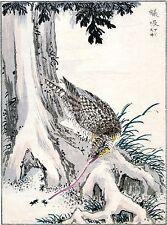 2 Japanese Woodblock Reproductions: Kashu: Wryneck & Thrush - 2 Fine Art Prints