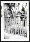 "HAWAII ""2 TOPLESS ISLAND GIRLS"" Real Vintage Photo 2.5"" x 3.5"""