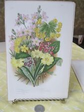 Vintage Print,WATER VIOLET,Flowering Plant Great Britain,1880,Pratt,#2