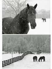 Pack Of 20 Horse Christmas Cards - Pack B