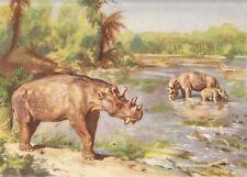 "Prehistoric N American Animal UINTATHERIUM Color Print By Z Burian 1958 VF 9x13"""