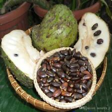Annona Muricata Seeds (also known as Guanabana, Soursop, Graviola) 50 Seeds