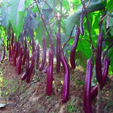 200 Seeds Eggplant Purple Long Bonsai Plant Tree House Herb Garden Flower Decor