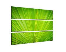 140x90 grün Palme Wedel Blatt closeup Makro Natur Keilrahmen Leinwand Sinus Art
