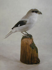Loggerhead Shrike Original Bird Wood Carving