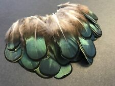 BULK 50 Lady Amherst Natural Green Pheasant Feathers DIY Art Craft Jewellery