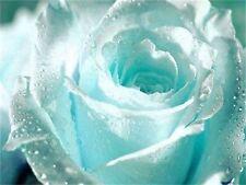 50Pcs Light Blue Rose Seeds Romantic Love Beautiful Climber Fragrant Flowers h2