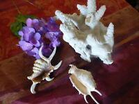lot du corail et des coquillages rares==  décor salle d eau ou collector
