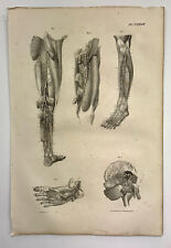 "Antique Original 1831 Human Anatomy Medical Print - 20.5""x13.75"" Leg Foot Study"