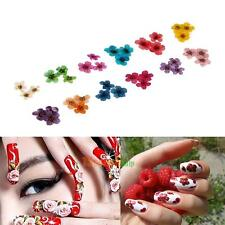 12 Color 3D Nail Art Sticker Real Dry Dried Flower DIY  Tool Tips Acrylic Decor