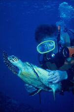 634081 plongeurs avec jeune tortue à écaille à palau A4 imprimé photo