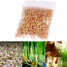 Harvested Cat Grass 30g/pack Seeds Organic Including Growing Guide un