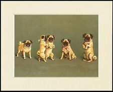 PUG GROUP OF DOGS CHARMING DOG PRINT MOUNTED READY TO FRAME