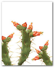 Cactus Print, Botanical Succulent Art, 8 x 10 Inches, Unframed
