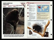 """PORCUPINE"" WILD LIFE FACT FILE ANIMAL CARD/HOME SCHOOL STUDY"